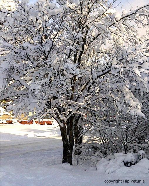 Wintertrees-1